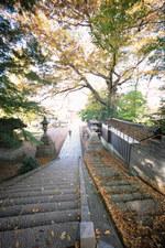 Ochiba1